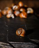 Snail shell on black stone next to others Stock Images