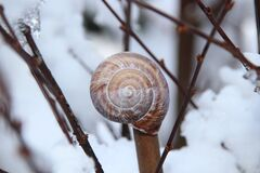Snail Shell on Brown Tree Branch Stock Image