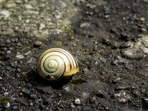 Snail shell. Brown and white snail shell Stock Photos