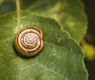 Snail Shell. A close up square image of a snail shell on a leaf royalty free stock photo