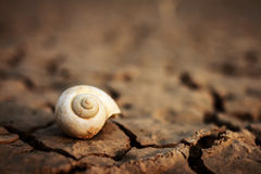 Snail shell. Stock Photography