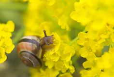 Snail. In a shell crawling in flowers royalty free stock photos