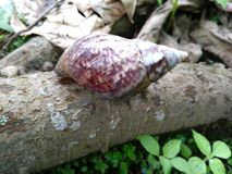 A snail shell that creeps into a tree Stock Image