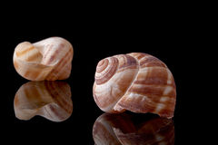 Snail Shell Stock Photos