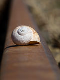 Snail shell Royalty Free Stock Photography