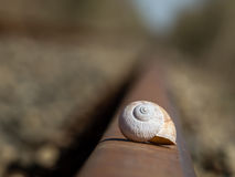 Snail shell Stock Photo