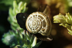 Snail shell and flowers. Snail on flower. snail shell and violet flowers Royalty Free Stock Photo