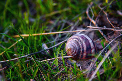 Snail shell in grass on the ground Royalty Free Stock Photography