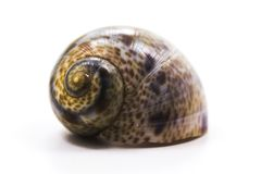 Snail shell isolated on a white background stock image