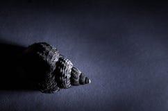 Snail shell Royalty Free Stock Photo