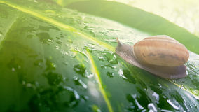 Snail shell in nature background Stock Photos