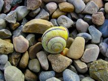 Snail Shell,. Ocean,Beach,Stones,Stripes,Strand Stock Photos