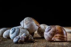 Snail shell on an old table in kitchen Royalty Free Stock Images