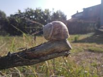 Snail shell over a tree branch. stock photos