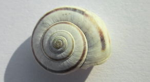 Snail shell. Photography of snail shell with whitei backgroung Stock Photography