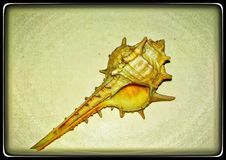 Snail shell royalty free stock photography
