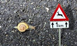 Snail with shell and road sign wild animals crossing Royalty Free Stock Photography