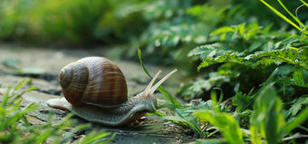Snail in a shell on the road Stock Image