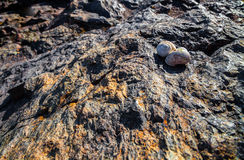 Snail Shell on Rock in Bright Sun Royalty Free Stock Photography