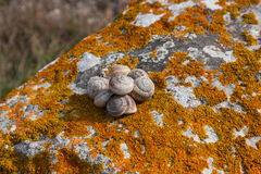 Snail shell on a rock covered with moss lichen orange Stock Photo