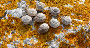Snail shell on a rock covered with moss lichen orange. Royalty Free Stock Photography