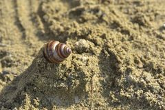 Snail shell in the sand on beach background at sunset Royalty Free Stock Images