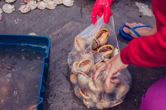 Snail  shell with shellfish. At seafood market Royalty Free Stock Images