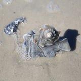 Snail Shell Stock Image