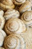 Snail shell. Sink snail. Modern Land shellfish Stock Photography