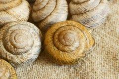 Snail shell. Sink snail. Modern Land shellfish Stock Photo