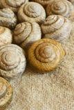 Snail shell. Sink snail. Modern Land shellfish Royalty Free Stock Image