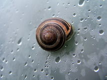 Snail in a shell royalty free stock image