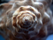 Snail shell spiral detail. Sea or ocean shell snail spiral detail Royalty Free Stock Photography