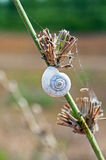 A snail shell on the stem. With cobweb Royalty Free Stock Photos