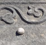 Snail shell on a stone. Snail shell on the old antique stone Stock Image