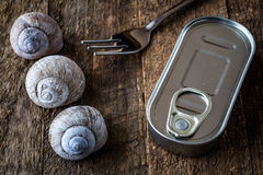 Snail shell and tin can on a wooden old table Stock Photos