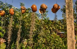 Shell pot in garden stock photography