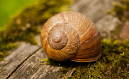 Snail Shell on Tree Trunk Royalty Free Stock Images