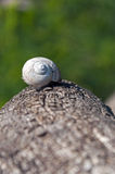 Snail shell at a tree trunk. Old snail shell at a tree trunk Royalty Free Stock Image