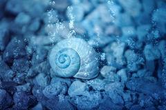 Snail shell under water. Shell from a snail submerged under water with air bubbles rising to the surface Stock Photo