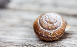 Snail shell on wood plank background Royalty Free Stock Photo