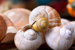 Snail on Shells Stock Photos