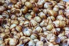 Snail shells Stock Photos