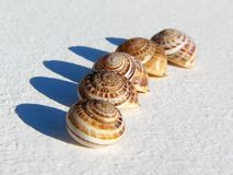 Snail shells. Five little smail shells on gray background Stock Image