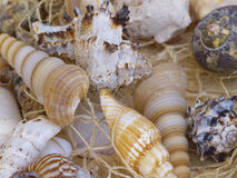 Snail shells Royalty Free Stock Photography