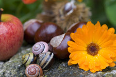 Snail Shells, Apple, Flower Stock Photos