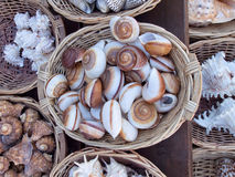 Snail shells Stock Photos