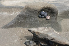 Snail shells on beach Stock Photography