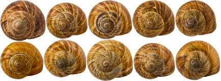 Snail shells isolated on white background. Stock Photography