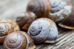 Snail shells on old wood plank background Royalty Free Stock Photos